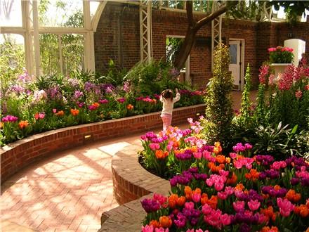 phipps-ella-tulips.jpg